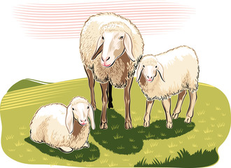 Sheep and lambs in the countryside.