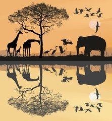 Savana with giraffes, herons and elephant