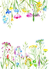 Floral frame of a wild flowers and herbs on a white background.Buttercup, cornflower,clover,bluebell,forget-me-not,vetch,timothy grass,lobelia,snowdrop flowers.Watercolor hand drawn illustration.