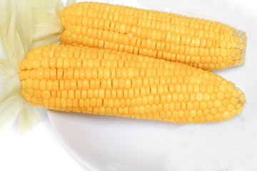 corn boiled on a plate  on white background