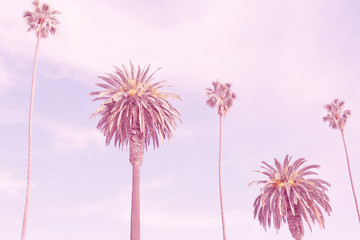 retro california palms