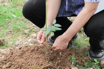 hand with Planting a tree in soil