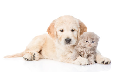 Golden retriever puppy and tiny kitten together. isolated on white background