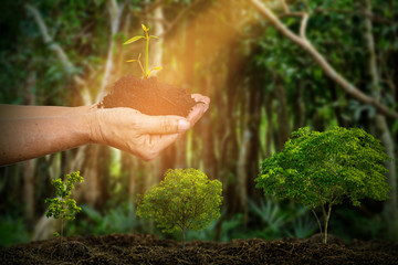 growth of trees. soil and tree in hand