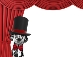 Cute dog hiding behind the curtain