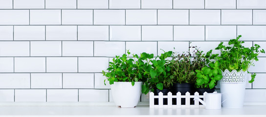 Mint, thyme, basil, parsley - aromatic kitchen herbs in white wooden crate on kitchen table, brick tile background. Potted culinary spice plants. Minimalistic lifestyle concept. Copyspace. Banner