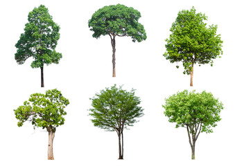 set 6 tree isolated on white