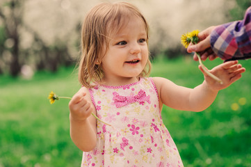cute happy toddler girl walking in spring park and picking dandelions