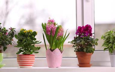Beautiful plants in pots on windowsill