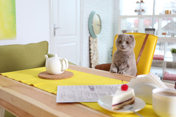 Cute funny cat sitting at table in cafe