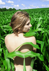 Nude girl in a field of green corn leaves