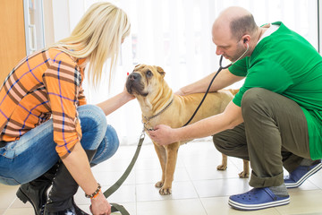 Veterinarian or doctor checking up dog.Surgery in Vet clinic.Under exposed photo