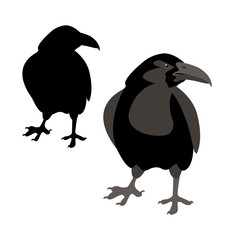 Crow vector illustration style Flat set