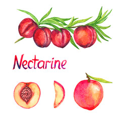 Nectarine branch with fruits, nectarine and cut slices, isolated set hand painted watercolor illustration