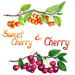 Sweet cherry and cherry branch with fruits, isolated hand painted watercolor illustration