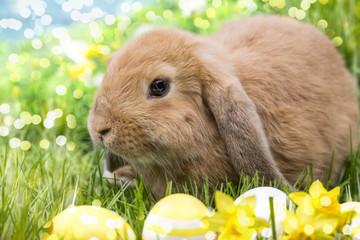 Kaninchen in der Natur