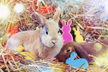 Kaninchen Ostern Grüße
