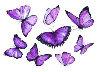 Flying purple butterfly. Watercolor illustration