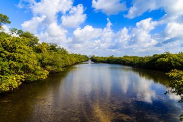 beautiful blue sky over mangrove-lined waterway