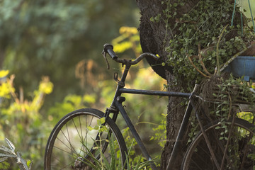 old bicycle with nature