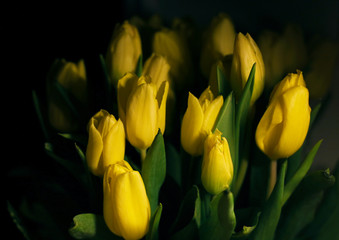 yellow tulips. Flowers in light composition