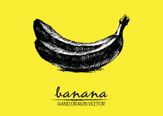 Digital vector detailed banana hand drawn retro illustration collection set. Thin artistic linear pencil outline. Vintage ink flat style, engraved simple doodle sketches. Isolated objects