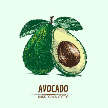 Digital vector detailed color avocado hand drawn retro illustration collection set. Thin artistic linear pencil outline. Vintage ink flat style, engraved simple doodle sketches. Isolated objects
