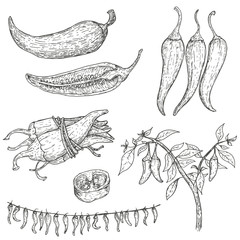 Set of vector hand drawn full, half, slices and bush chili peppers. Natural eco food engraved vintage style illustration. Design farm market product.
