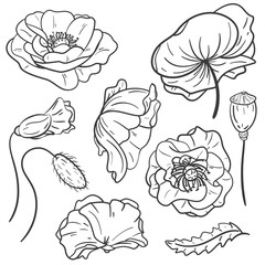 Hand drawn set of poppy flower. Isolated on white background. Vintage vector illustration.