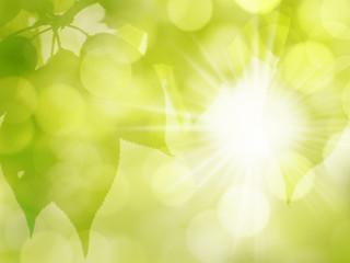 grüner sonniger Blätter Natur Hintergrund im  Frühling und Sommer