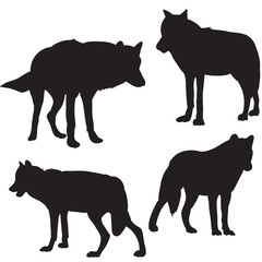 Wolf silhouette black many individuals isolated