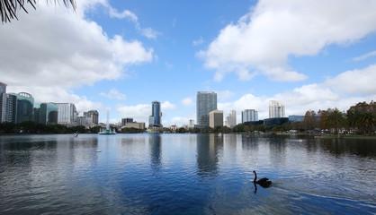 Black swan gliding under blue skies at Lake Eola in downtown Orlando, Florida.