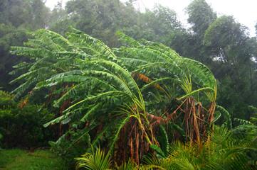 Tropiques - Vent pendant un cyclone