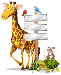 Giraffe and other animals by the sign