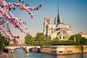 Notre Dame de Paris at spring, France Fototapete