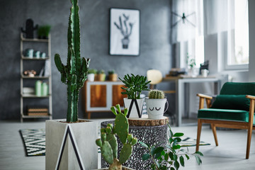 Room with cacti decorations Wall mural