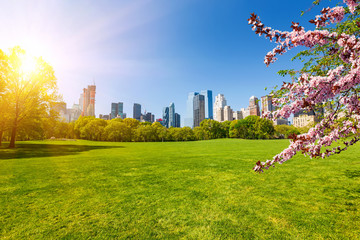 Fototapete - Central park at spring sunny day, New York City
