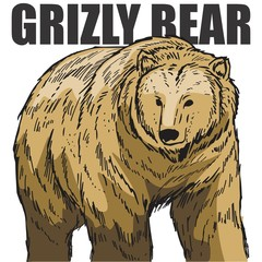 CARTOON HAND DRAWING GRIZZLY BEAR