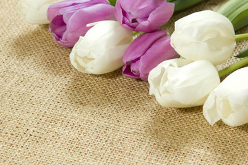 purple and white tulips lying on the surface