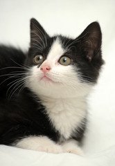 An image of a nice black and white pet
