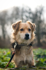 Cute little mixed breed dog portrait