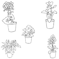 Houseplants. Sketch by hand. Pencil drawing by hand. Vector image. The image is thin lines