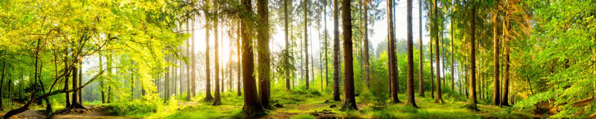 Fototapete - Idyllischer Wald bei Sonnenaufgang