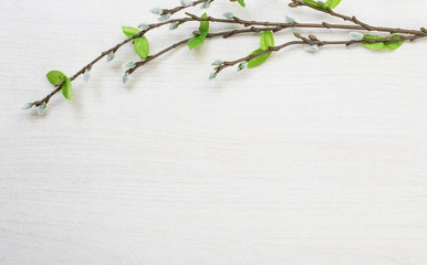 Spring easter pussy willow lying on white wooden desk table background with space for titles and text
