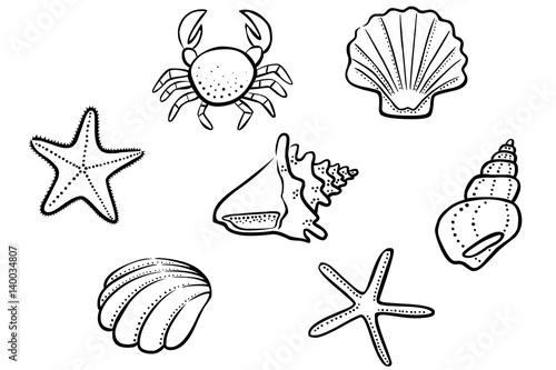 Strand comic schwarz weiß  Set: Schwarz-weiß Zeichnung Muschel, Seestern, Schneckenhaus ...