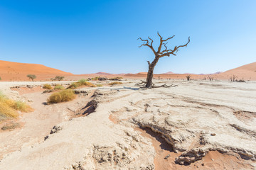 The scenic Sossusvlei and Deadvlei, clay and salt pan with braided Acacia trees surrounded by majestic sand dunes. Namib Naukluft National Park, travel destination in Namibia.