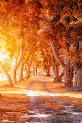 Beautiful Autumn Park in Sunny Day..
