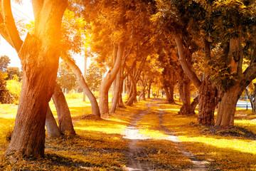 Beautiful Autumn Park in Sunny Day