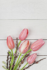 Wall Mural - Tulips and catkin, white wooden background, copy space