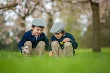 Two adorable boys, reading a book in a spring blooming park